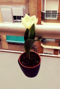 recordar-cultivar